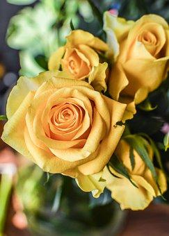 Rose, Bouquet, Flower, Petal, Floral, Blooming