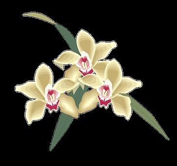 Flower, Icon, Symbol, Plant, Bang, Sign, Petals