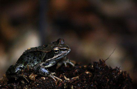 Frog, Animal World, Nature, Amphibian, Small, Animal