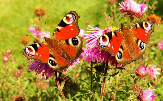 Nature, Butterfly Day, Insect, Summer, Color, Animals