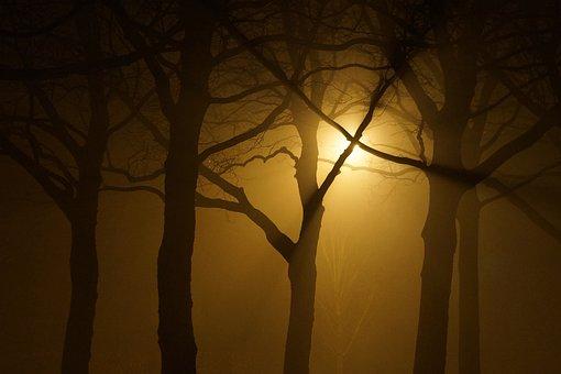 Silhouette, Night, Sunset, Tree, Backlit, Light