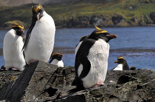 Bird, Animal World, Nature, Waters, Penguin, Animal