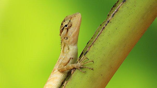 Nature, Wildlife, Desktop, Animal, Closeup, Lizard