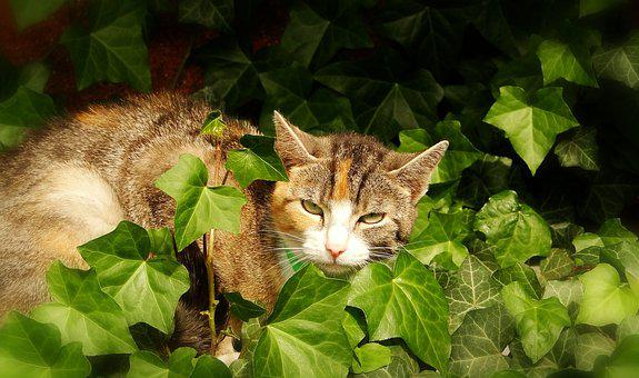 Nature, Charming, Cat, Animals, A Little, Mammals, Pets