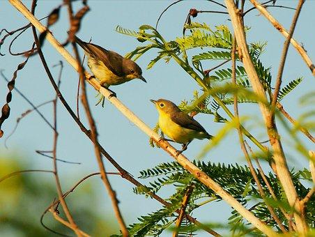 Bird, Wildlife, Nature, Animal, Tree, Outdoors