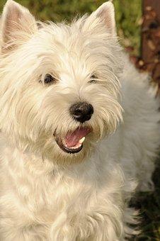 Dog, Animal, Pet, Canine, Mammal, Cute, Domestic