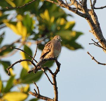 Wildlife, Bird, Tree, Outdoors, Nature, Wild, Animal