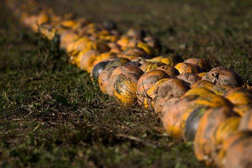 Nature, Autumn, Food, Background, Pumpkin