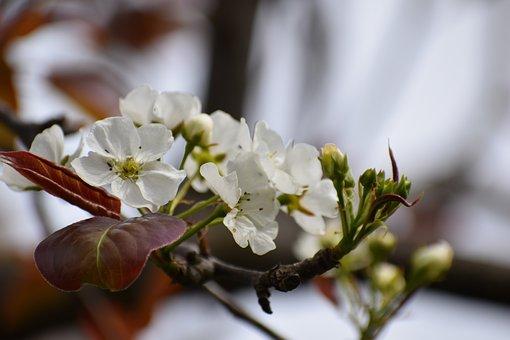 Flower, Nature, Flora, Tree, Branch, Blooming, Petal