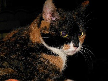 Cat, Kitten, Animals, Cat Tongue, Animal Shelter, Cute