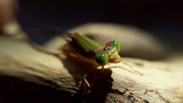 Insect, Wildlife, Nature, Fly, Animal, Pest, Closeup
