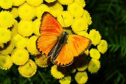 Nature, Flower, Plant, Garden, Color, Butterfly Day