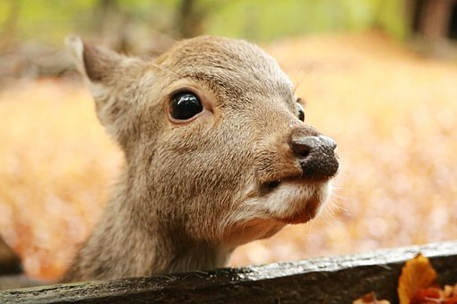 Nature, Mammal, Animal World, Animal, Wild, Cute, Small