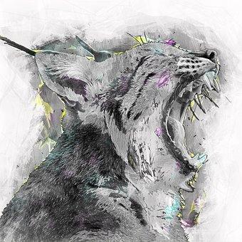 Bobcat, Lynx, Wildcat, Animal, Mammal, Close-up, Head