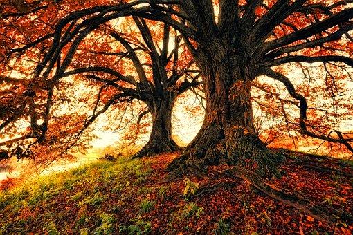 Tree, Nature, Leaf, Wood, Autumn, Leaves, Hill