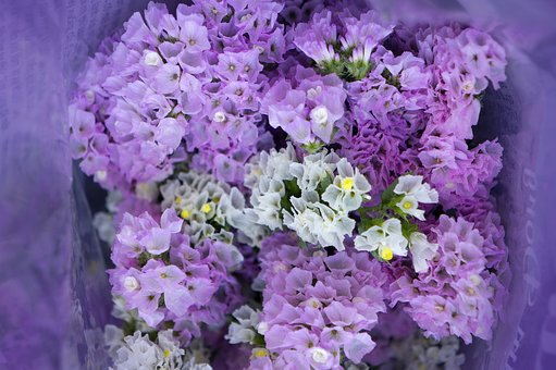 Bouquet, Hoa Sa Lem, Pink To Pale Purple