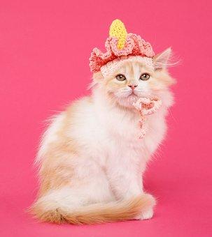 Jelly Carpet Ghz, Marie, Cat, Cute, Of Fluff