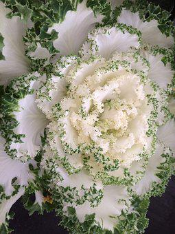 Flower, Leaf, Flora, Nature, Decoration, Floral