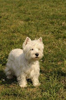 Dog, Canine, Mammal, Cute, Animal, Portrait, Little