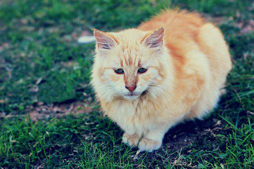 Animal, Cute, Cat, Mammal, Nature, Little, Pet, Eye