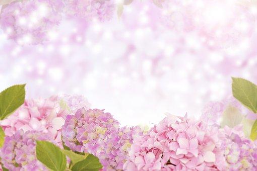 Hydrangea Flower, Flower Background Flora, Nature