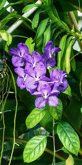 Orchid, Spotted, Purple, Tropical, Nature, Flower