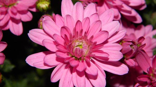 Flower, Flowers, Purple, Purple Flowers, Pink