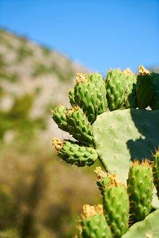 Cactus, Hot, Plant, Nature, Dea, Water, Thirst, Desert