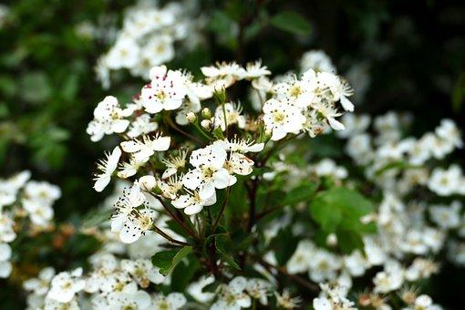 Hastings, Flower, Plant, Nature, Season, Petal, Garden