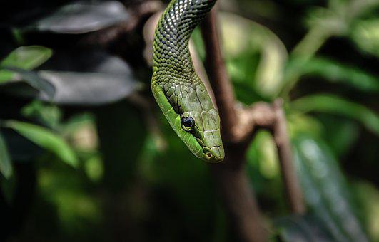 Nature, Animal World, Snake, Animal, Reptile