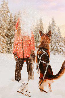 Snow, Winter, Coldly, Leann, Dog, Animals