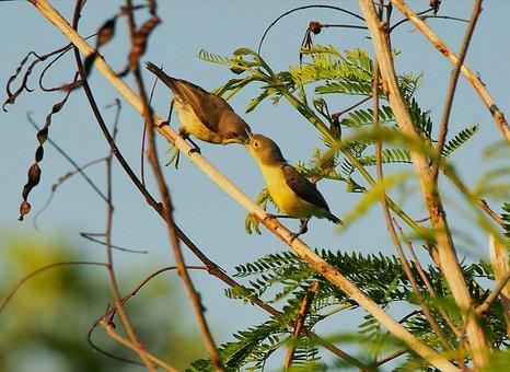 Bird, Wildlife, Tree, Nature, Animal, Outdoors, Little