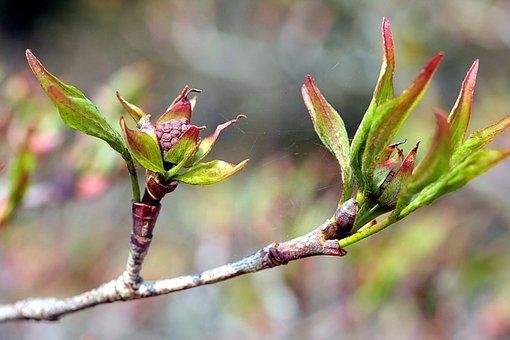 Nature, Leaf, Plant, Tree, Spring, Flowering Trees