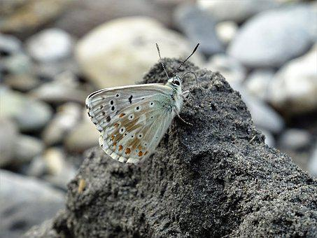 Wing, Small, Butterfly, Close, Environment, Color, Wild