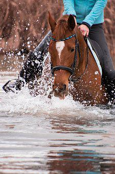 Action, Waters, Sport, Movement, Horse, Ride