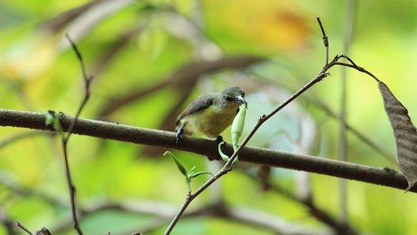 Wildlife, Bird, Nature, Outdoors, Animal, Little, Wing