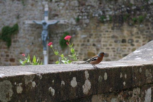 Nature, Bird, Tree, Animal, Small, Summer, Stone