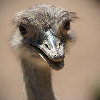 Animal World, Bird, Bill, Bouquet, Animal, Emu, Laugh