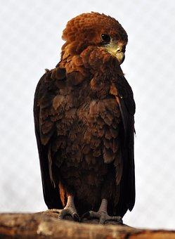 Bird, Wild World, Sas, Nature, Animal, Wild, Looter