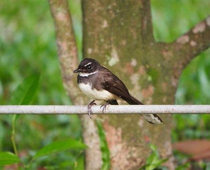 Bird, Wildlife, Nature, Outdoors, Wing, Animal, Little