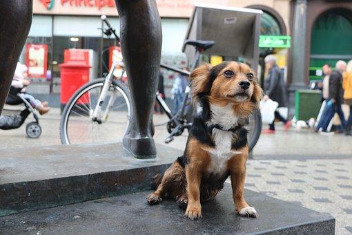 Street, City, People, Dog, Urban, Cardiff, City Centre