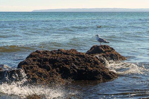 Waters, Sea, Ocean, Coast, Nature, Travel, Beach, Surf
