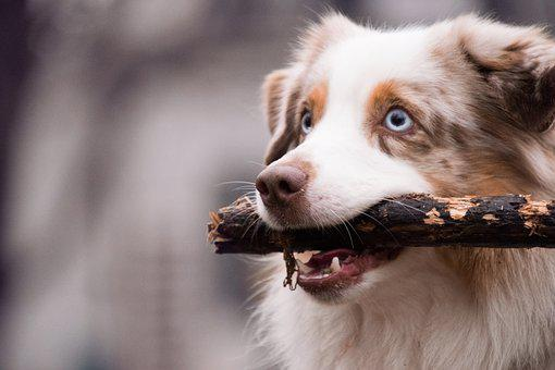 Cute, Animal, Portrait, Mammal, Dog