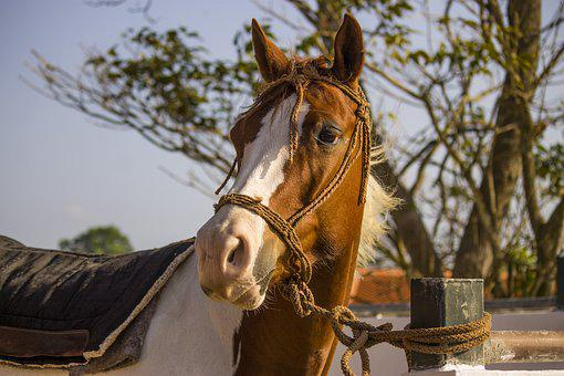 Horse, Farm Animal, Animal Work, Equine