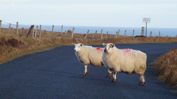 Agriculture, Farm, Landscape, Nature, Field, Sheep