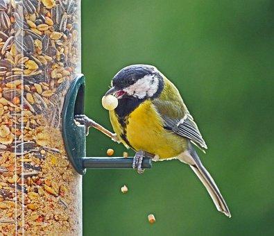 Tit, Winter Feeding, Treat Dispenser, Grains, Bird