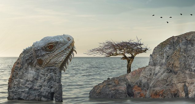 Lizard, Iguana, Monitor, Reptile, Head, Nature, Sea
