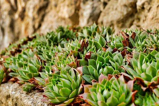 Nature, Plant, Leaf, Dry, Food, Close, Flower, Summer