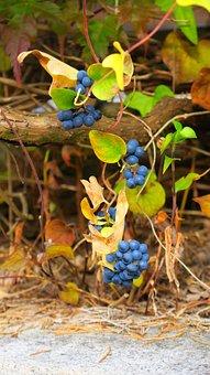Fruit, Nature, Leaf, Food, Outdoor, Tree, Plant, Wood