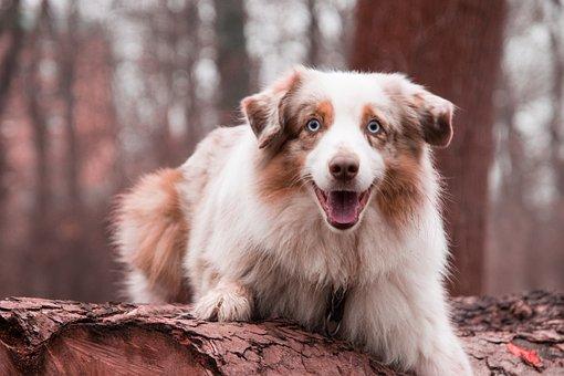Nature, Cute, Animal, Mammal, Portrait